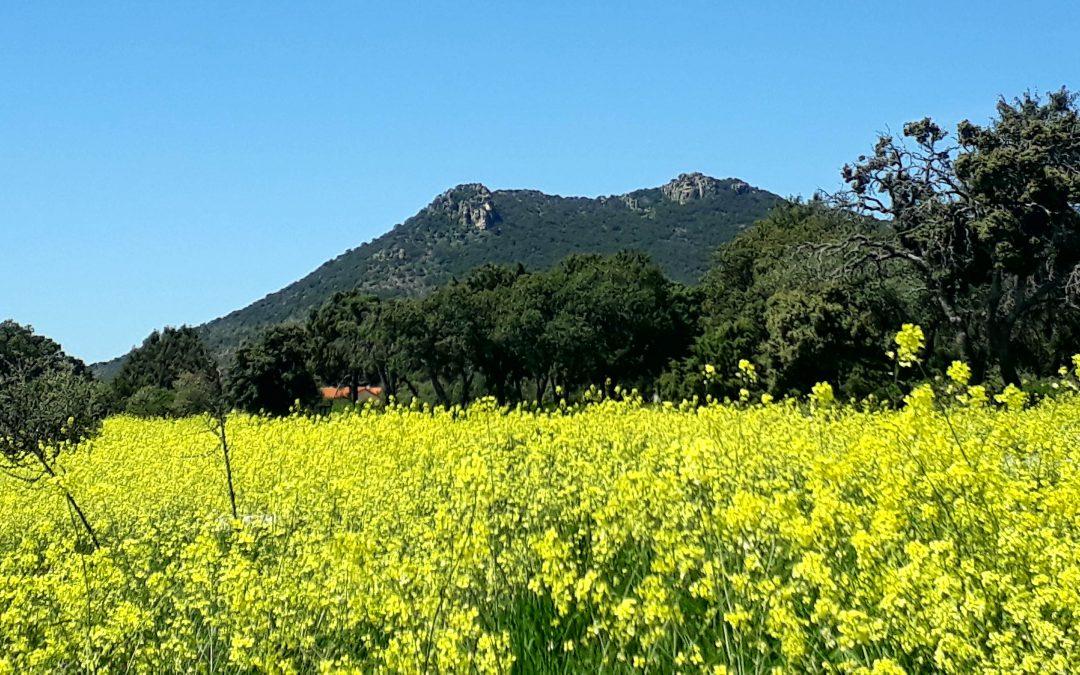 De paseo por la Sierra de Hoyo