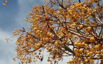 Cómo identificar árboles de hoja caduca en invierno
