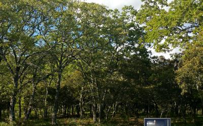 Cuatro pelis sobre bosques para los amantes de la Naturaleza